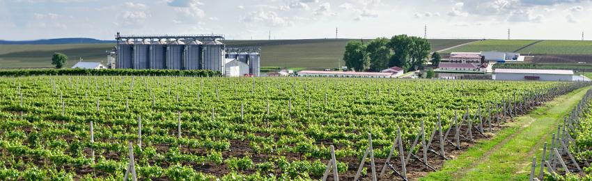 Viticultura si vinificatie Domeniile Lungu